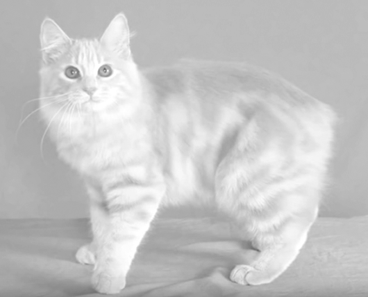 Manx Museum (Douglas) - 2018 All You Need to Know Before ...  |Manx Cat History